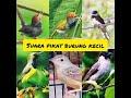 Suara Pikat Burung Kecil Ampuh   Mp3 - Mp4 Download