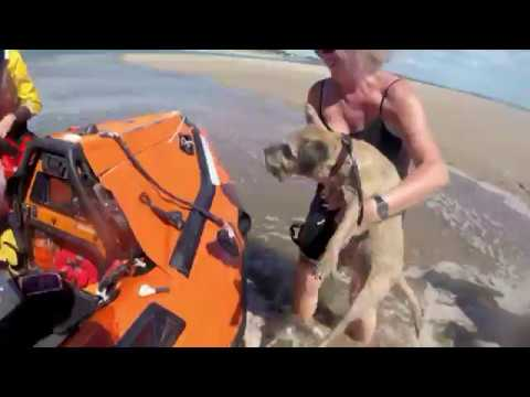 Lifeboat dog rescues
