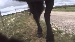 Comparatif hipposandales (chaussures pour cheval pieds nus) Renegade Originale - Episode 6