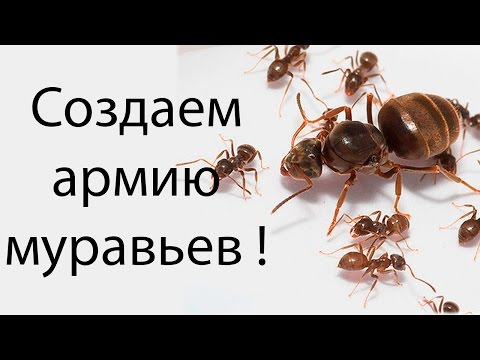 скачать игру про муравьев Empires Of The Undergrowth - фото 11