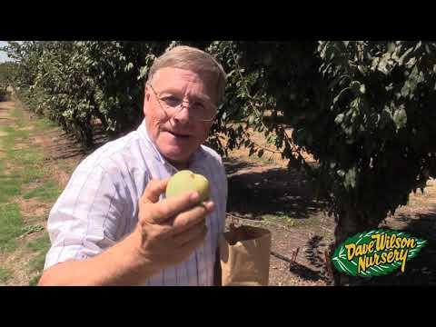 Late Season Fruit Tour