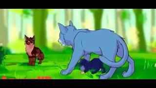 Коты воители - клип не могу