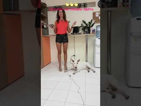 Кости для собак Alpha Spirit
