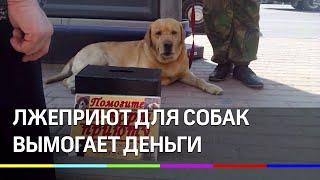 Приют ворует собак и под видом волонтеров собирает деньги на их лечение.