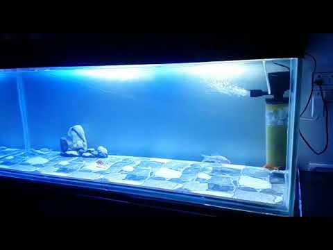 New 4 feet aquarium with ceramic tiles in the bottom - YouTube