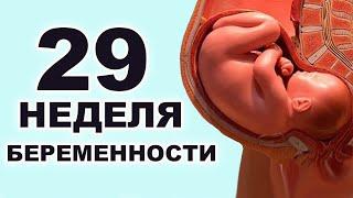 Что происходит с ребёнком и мамой на 29 неделе беременности? 7 месяц беременности. Третий триместр.