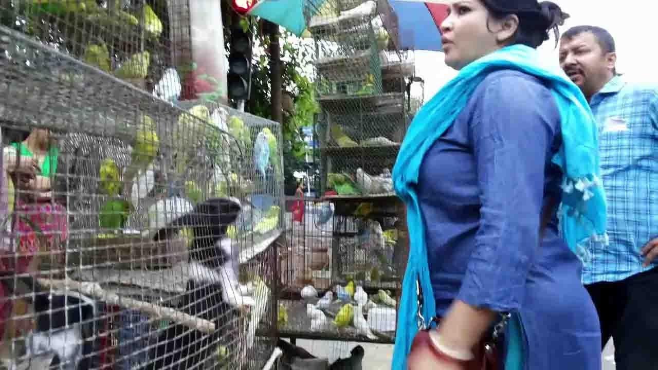 BEAUTIFUL BIRD AT GALIFF STREET PET MARKET KOLKATA || MARCH 2017 VISIT