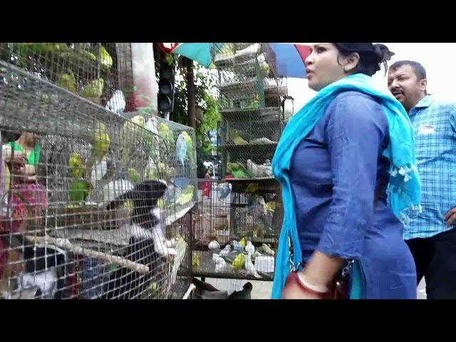 BEAUTIFUL BIRD AT GALIFF STREET PET MARKET KOLKATA    MARCH 2017 VISIT
