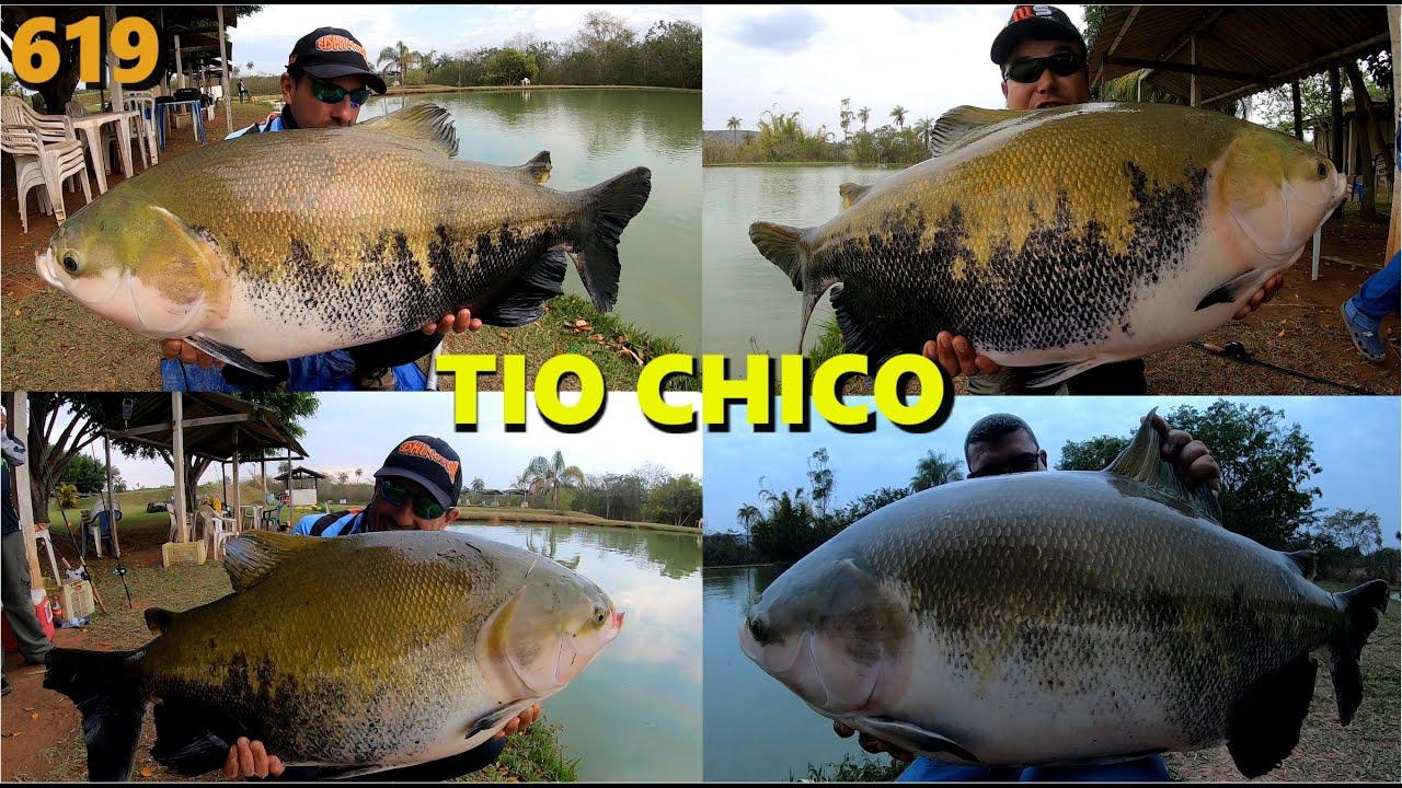 Pescaria de TAMBAQUIS, Jundiá e grandes Tilápias no Pesqueiro Tio Chico - Fishingtur na TV 619 pesca