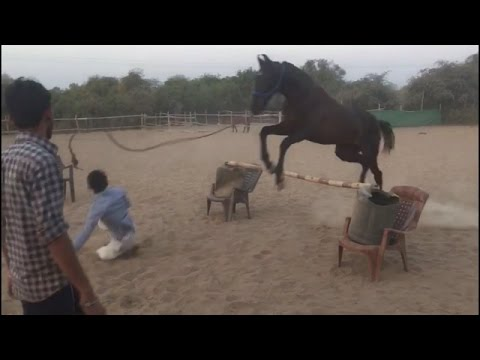 horse playing a big ball and jumping