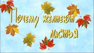 видео Почему желтеют и опадают листья осенью