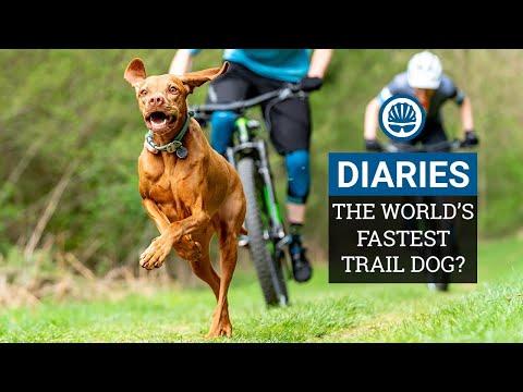 Racing The World's Fastest Trail Dog | Joe & Jack Take on Ruby the Vizsla | BikeRadar Diaries Ep12