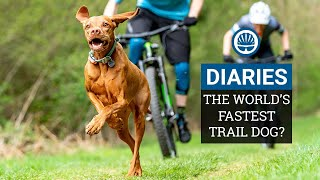 Racing The World's Fastest Trail Dog | Joe & Jack Take on Ruby the Vizsla | BikeRadar Diaries Ep12