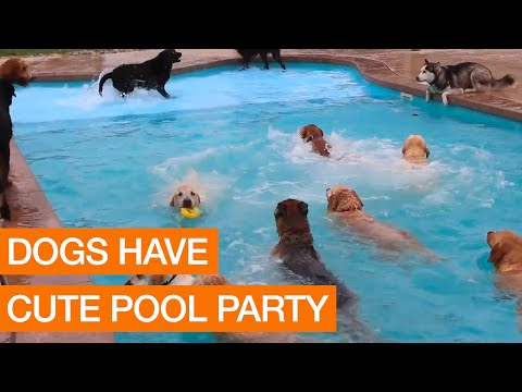 Dogs Have Cute Pool Party (Package)