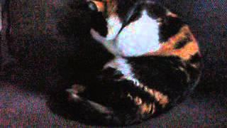 Кошка Джюльета,начало жизни Лето 2004 года.