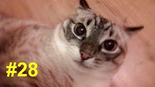 Глубокие мысли кота о хозяевах   Profound cats thoughts about the hosts