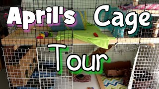 April Rabbit Cage Tour-2015