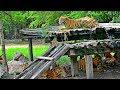 Safari World Bangkok, Thailand | Ride through Open Animals HD