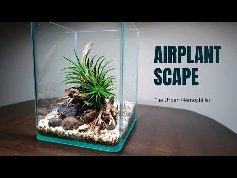 Airplant Scape (Tillandsia display idea)