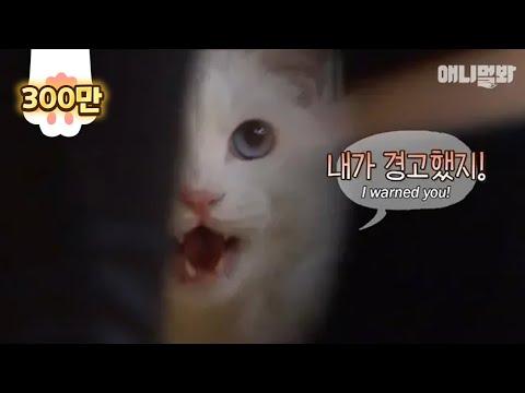 고양이가 경고한다고 얼마나 무서울까 싶었다 이걸 보기전까지는ㅎㄷㄷ.. ㅣ What Did This Cat Warn About, And To Whom?