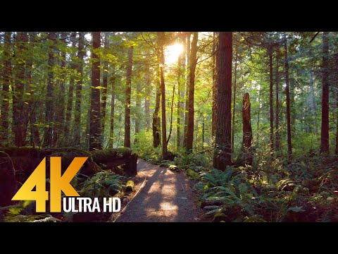4K Virtual Forest Walk with Nature Sounds Tradition Lake Loop Trail, Issaquah