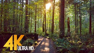 Enjoy the lovely summer adventure! this almost 2-hour video will take you on a walking tour along tradition lake loop trail warm sunny day. get insp...