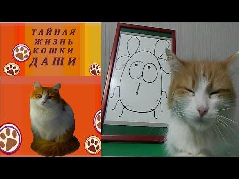Загадки от кошки Даши.