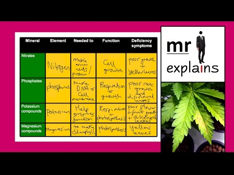 Mr I Explains: Mineral Deficiency In Plants