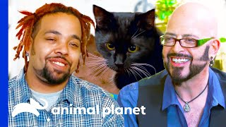 Quirky Cat Owners | My Cat From Hell