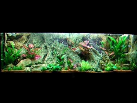 amazonas aquarium 720 liter plantet tank youtube. Black Bedroom Furniture Sets. Home Design Ideas