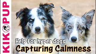 Capturing Calmness- how to train calmness in dogs