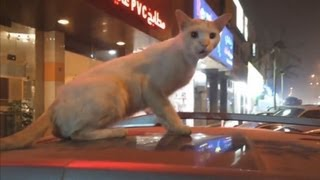 Смешные животные || Funny Animals #3