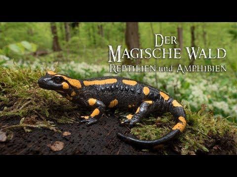 Der Magische Wald Reptilien und Amphibien-Amphibien Doku
