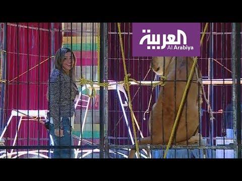 صباح العربية : مصرية تخيف الوحوش  - نشر قبل 3 ساعة