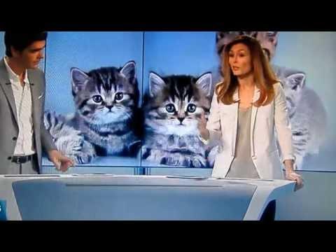 Vente de chats et de chiens