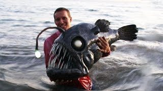 Unbelievable Sea Creatures That Will Truly Surprise You!
