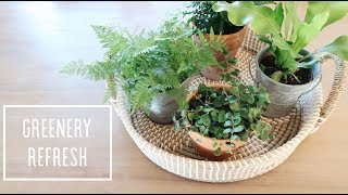 EASY HOME DECOR REFRESH WITH PLANTS