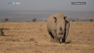 Picture This – Saving Africa's Elephants & Rhinos