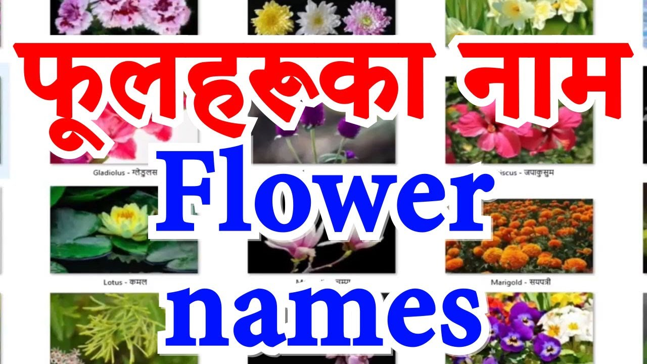 Names Of Flowers In English And Nepali फ लहर क न म Youtube