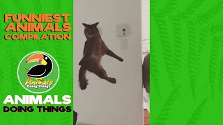 Funniest Animals Vol. 4 | Funniest Animals Doing Things