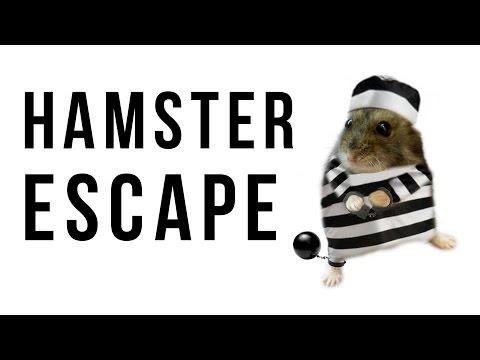 Funny hamster escape