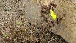 видео Как заставить растение цвести?