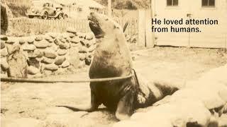 Oregon Coast History: Wacky Tale of Joe the Sea Lion, Lincoln City in the '30s