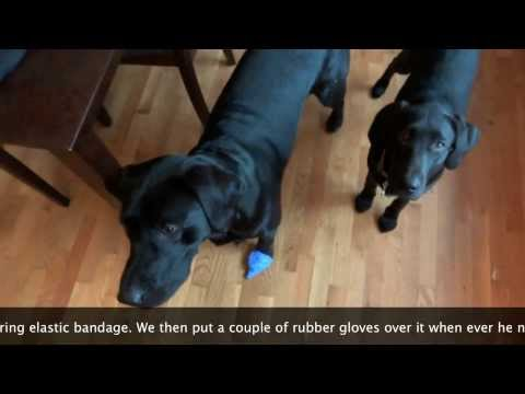 Home Remedy To Stop Dog From Licking Wound