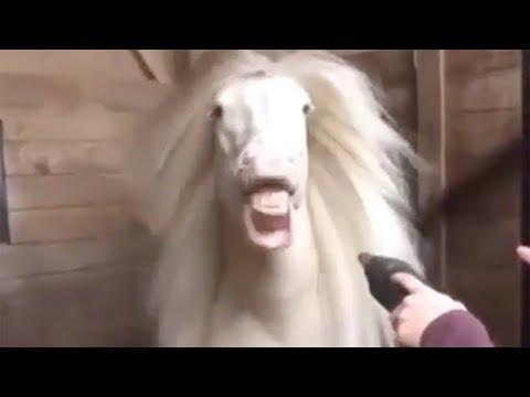 Was Tiere So Denken 89 - Pferde Special