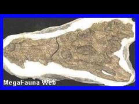 Cerrejonisuchus Tribute