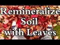 Why I Prefer Leaves over Rock Dust to Remineralize Soil