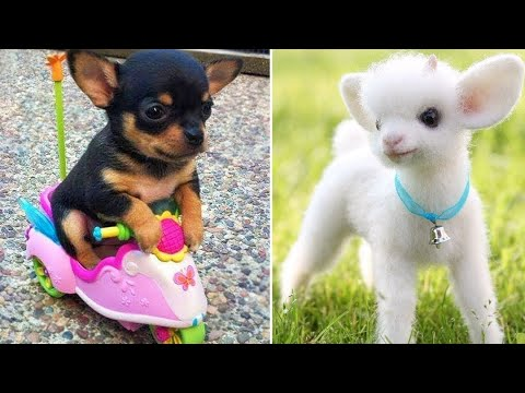 Baby Animals  Funny Cats and Dogs Videos Compilation (2019) Perros y Gatos Recopilacin #5