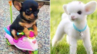 Baby Animals Funny Cats and Dogs Videos Compilation 2019 Perros y Gatos Recopilación 5