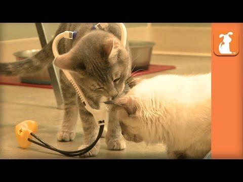 Kitten Doctors Are The Best Doctors - Kitten Love